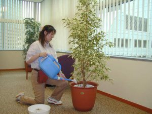 観葉植物メンテナンス