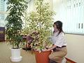 観葉植物交換