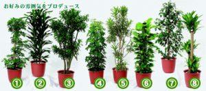 観葉植物の種類