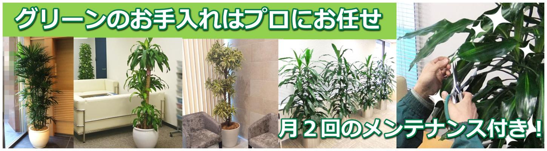 観葉植物の育て方