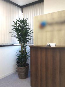 オフィスの観葉植物レンタル設置例