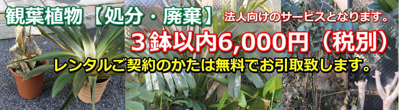 観葉植物・胡蝶蘭・処分・廃棄
