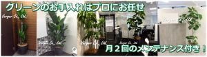 観葉植物レンタル設置例
