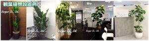 観葉植物rレンタルの設置例