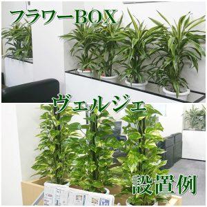 観葉植物をプランターボックスに入れた設置例
