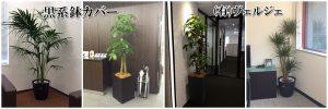 観葉植物レンタル設置例黒色系鉢カバー