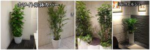 観葉植物レンタル設置例白色系鉢カバー