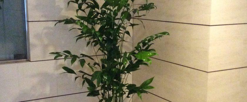 観葉植物レンタル設置例ホワイト陶器鉢