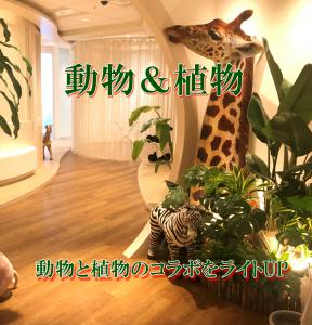 観葉植物と動物