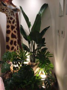 観葉植物アフリカ系