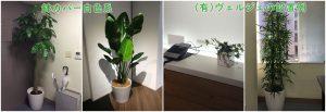 観葉植物レンタルの設置例白色系鉢カバー