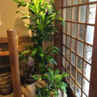 店舗入り口の観葉植物レンタル