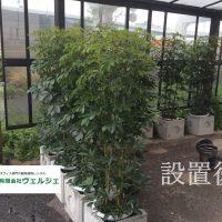 喫煙所に観葉植物