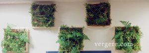 壁面緑化壁掛けグリーン