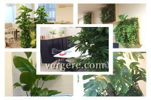 観葉植物レンタルの設置例