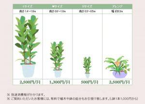 観葉植物レンタル価格表