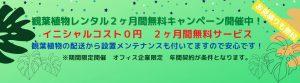 観葉植物レンタルキャンペーン