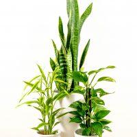 観葉植物ブーム